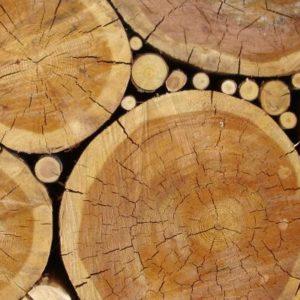 Découverte d'une famille de protéines à cuivre semblable aux enzymes dégradant la cellulose chez les champignons