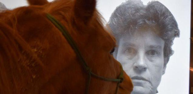 Les chevaux, des experts en reconnaissance faciale !