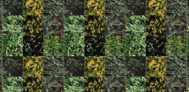 Un challenge international pour mieux compter les épis de blé par analyse d'image