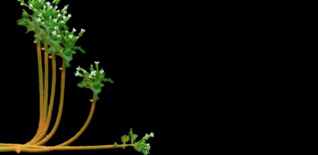 Les plantes, sensibles à leur environnement et capables de s'y adapter en mouvements