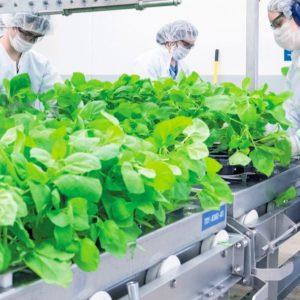 L'agriculture pourrait-elle être à l'origine d'un vaccin contre le Coronavirus ?