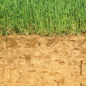 Une gestion durable des sols agricoles pour séquestrer le carbone et limiter le changement climatique