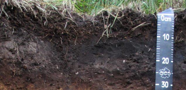 Carbone dans les sols : mise au point d'un nouveau modèle mathématique
